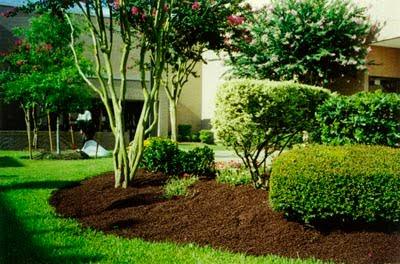 yard with mulch