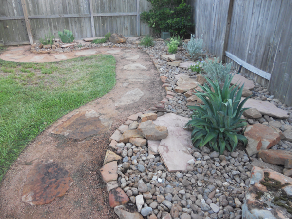 Backyard Cactus Garden Katy Landscaping